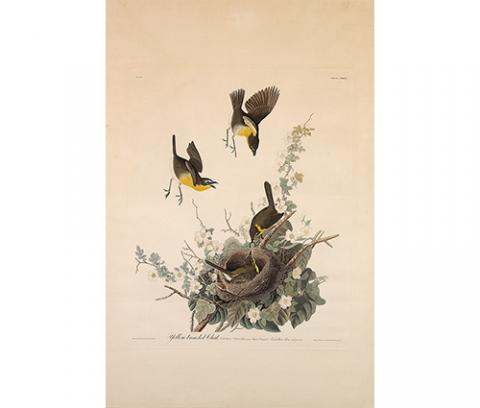 three yellow, gray, and white birds hovering over a nest surrounded by flowers and leaves; one bird lies in the nest being fed a worm